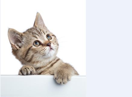 猫もびっくり