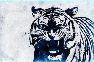 虎のイメージ